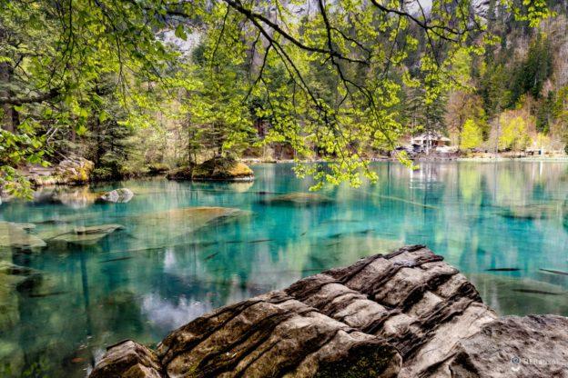 Sø i skov
